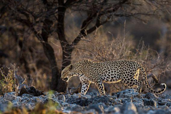 Luipaard van Richard Guijt