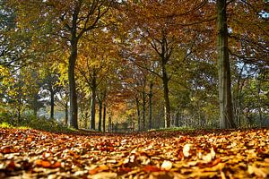 Kleurrijke herfstbladeren in het bos