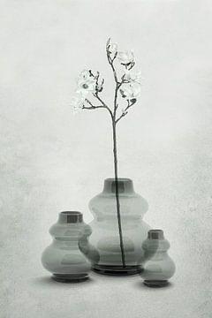 Glazen vazen in transparante grijs-groen tinten van Color Square