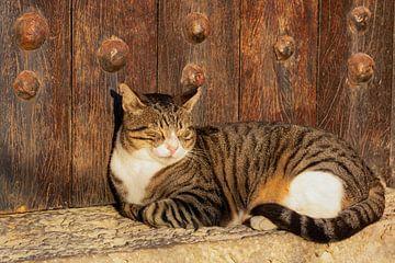 Kat in de zon van D Meijer