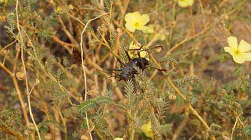 Insect von Erna Haarsma-Hoogterp