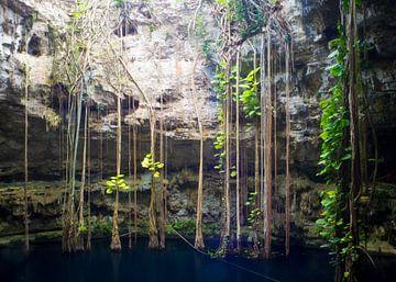 Cenote bij Valladolid in Yucatan, Mexico van Michiel Dros