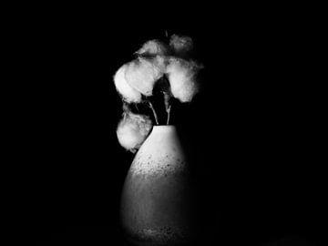 Baumwolle in einer Vase von Maikel Brands
