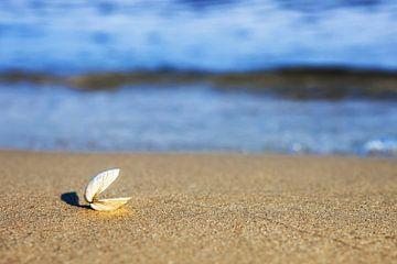Eine offene Muschel am Strand
