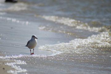 Een meeuw op het strand van Hindeloopen Natuurlijk