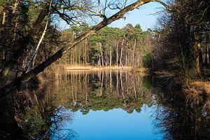 Spiegeling bos in water ven van Ron de Regt