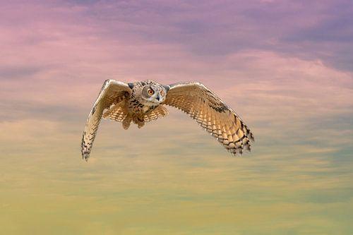 Een Euraziatische oehoe of oehoe. Vliegt met uitgespreide vleugels tegen een dramatische hemel. Rode