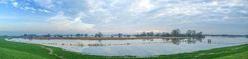Les hautes eaux dans les plaines inondables de la rivière IJssel sur Sjoerd van der Wal