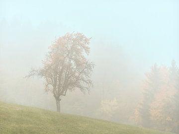 Herfstkleuren in de Ostalb van Max Schiefele
