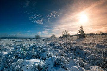 Paysage hivernal ensoleillé sur Arjen Hartog