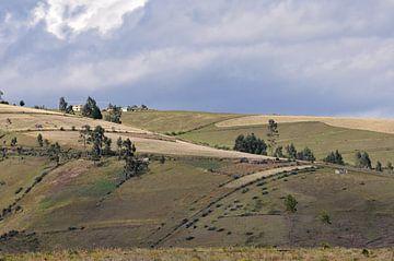 Des collines verdoyantes en Equateur sur