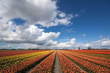 Photo de paysage pittoresque sur Maurice de vries