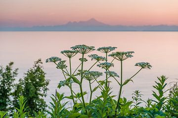 Sonnenuntergang über der Alaska Mountain Range von Denis Feiner