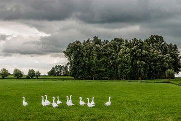 Landschap met grasland, bomen, witte ganzen en dreigende lucht. van Dirk Huckriede