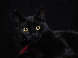 Le chat noir van