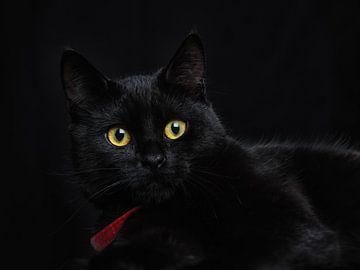 Le chat noir sur Lex Schulte