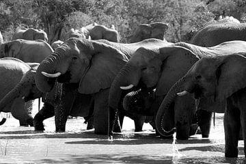 Elefanten in Südafrika von Natascha Nellestein