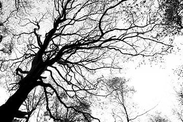 Schwarzwaldfotografie - Herbstsaison von Linsey Aandewiel-Marijnen