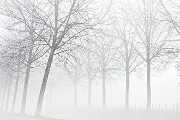 Bomen in de mist sur Paul Arentsen