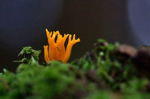 Oranje boskunst