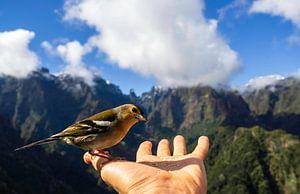 Beter een vogel in de hand van Gideon Gerard