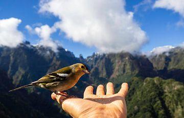 Lieber einen Vogel in der Hand von Gideon Gerard