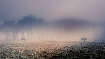 Mistig landschap met paarden en bomen van