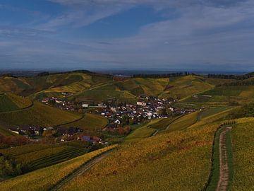 Vue sur les vignobles jaunes de Durbach en automne sur Timon Schneider
