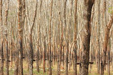 Rubberplantage in Vietnam van Dirk Verwoerd