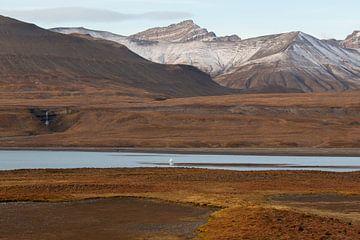 Landschaft mit Wasserfall auf Spitzbergen von Michèle Huge