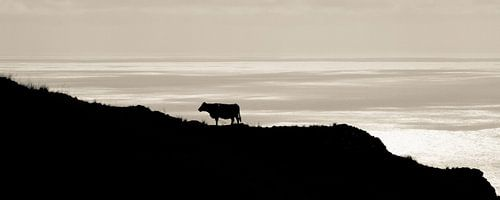 View van een koe. van