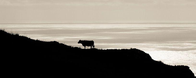 View van een koe. van Hennnie Keeris