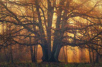 Oud gehuld in Goud van Joris Pannemans - Loris Photography