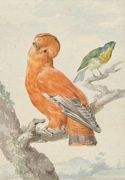Deux oiseaux exotiques, Aert Schouman sur