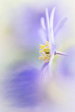 Genießen Sie den Frühling! von Bob Daalder