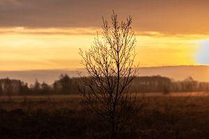 boompje in de vroege ochtend
