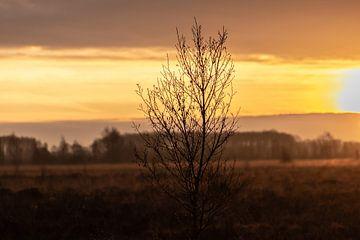 boompje in de vroege ochtend van Tania Perneel