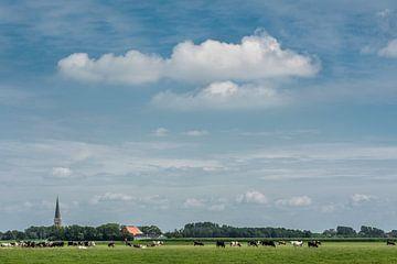 Het Friese landschap nabij Tzum met koeien in het groene gras van Harrie Muis