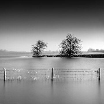 Zwei Bäume und Zaun von Ruud Peters