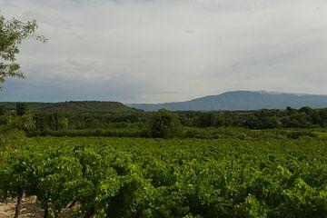 druivengaarde in de Provence van Cor Pater
