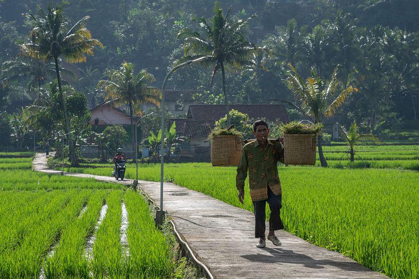 Straße durch die Reisfelder von Anges van der Logt