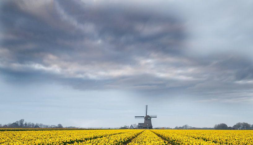 Windmolen en narcissen van Menno Schaefer