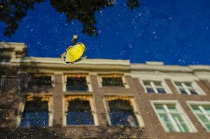 Geel blaadje drijvend op een waterplas met zichtbare reflectie van Amsterdamse grachtenpanden.| van