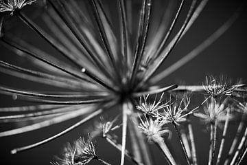 Blumenkunst in Schwarz-Weiß von Petro Luft