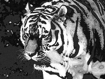Tiger Tiger brennt hell: Nahaufnahme eines sibirischen Tigers. von Koolspix