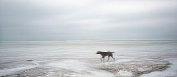 Hund allein in ruhigen Meer von Marcel van Balken
