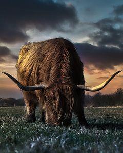 Mein Lieblings-Highlander von Wim van Beelen
