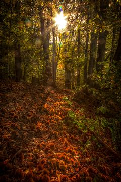 Spelen met licht en herfstkleuren van John Kreukniet