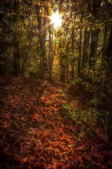 Spelen met licht en herfstkleuren