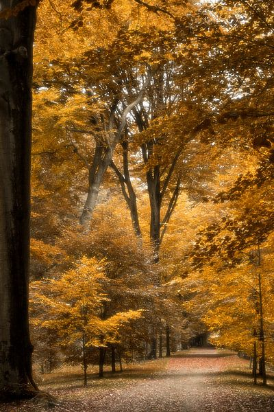 Herfst in het Park Brasschaat van Vandain Fotografie